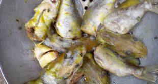 poissons-toxique-dange-site-bamada-net-fleuve-niger