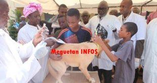 rage-maladie-chiens-vaccination-veterinaire