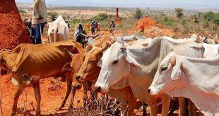 vache-troupeaux-elevage-bovine-animaux-eleveurs-maladie-charbon